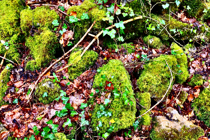 Moss and stone blog