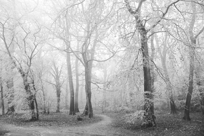 Image 41 Mist Weston Woods