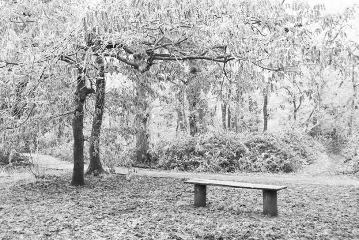 Image 43 Bench Weston Woods Winter