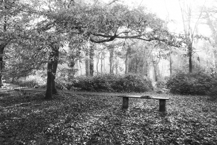 Image 44 Bench Weston Woods Spring