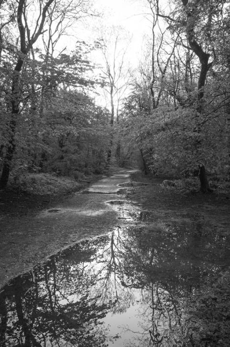 Image 45 Reflections Weston Woods