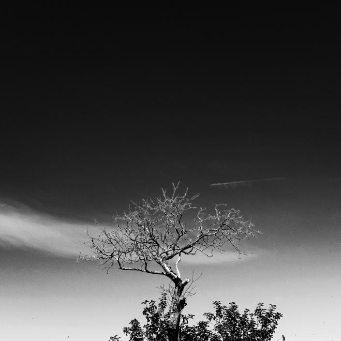 Image 60 Tree and Cloud