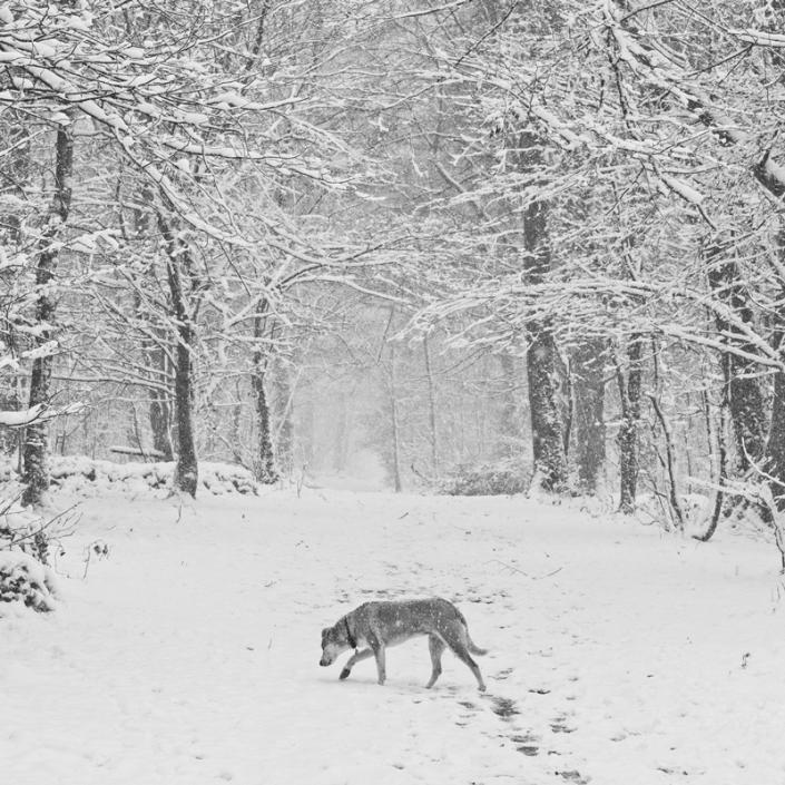 Image 62 Blizzard Weston Woods