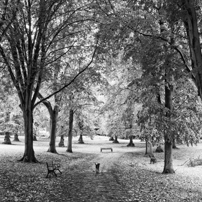Image 63 Ashcombe Park