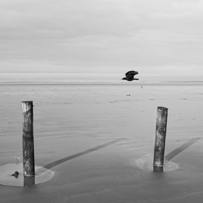 Image 66 Bird and Poles