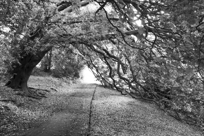 Image 9 Tree Growing Over Path Ashcombe Park