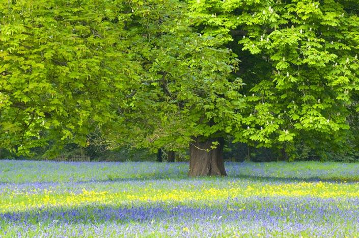 Wild flower meadow Uphill resized 800